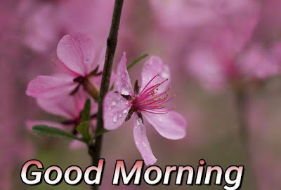 good morning wishes with rain images