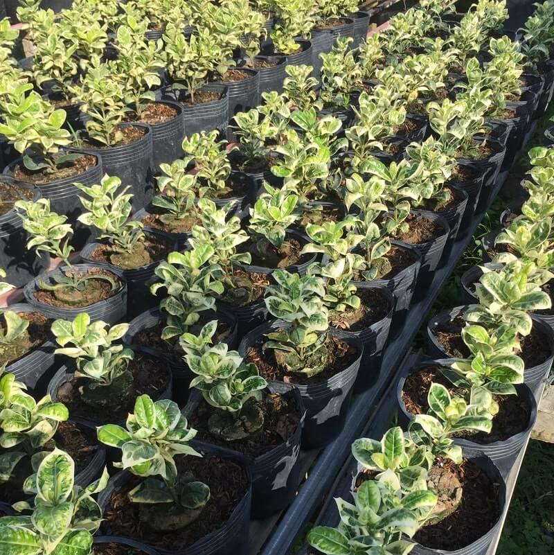 Các loại hoa tại Làng Hoa Sa Đéc 10