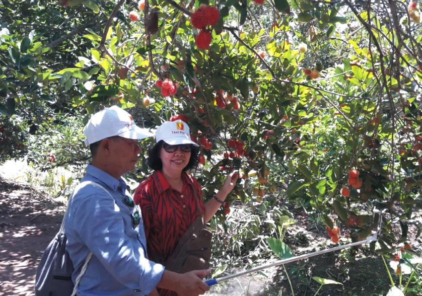 thăm vườn trái cây cù lao tân Phong - tour cà mau 3 ngày 2 đêm