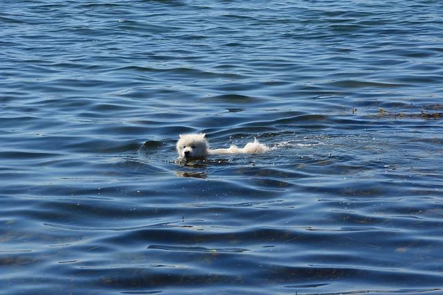 Bathing a dog