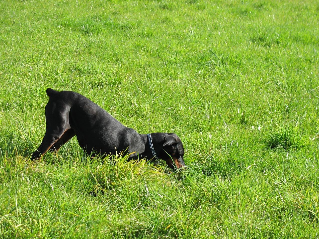 Comportement du chien: comment l'empêcher de creuser?