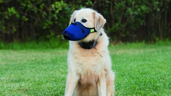 How can pets help us through the coronavirus crisis