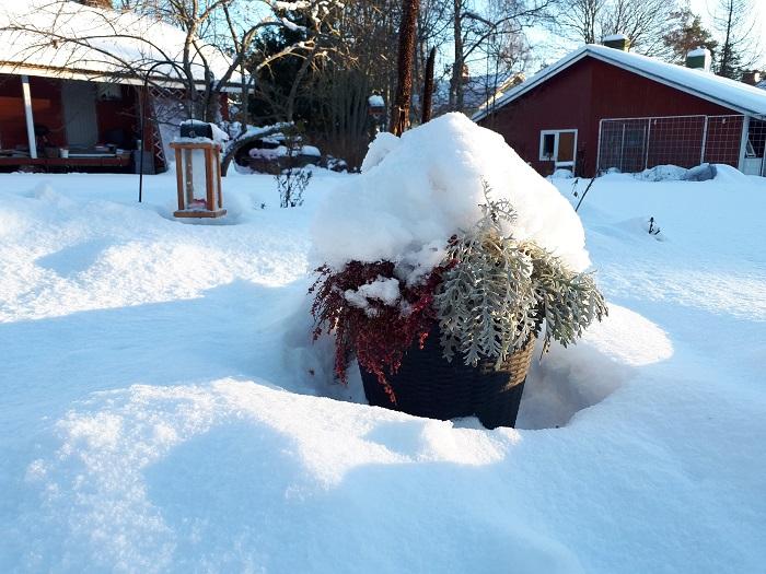 piha puutarha talvella