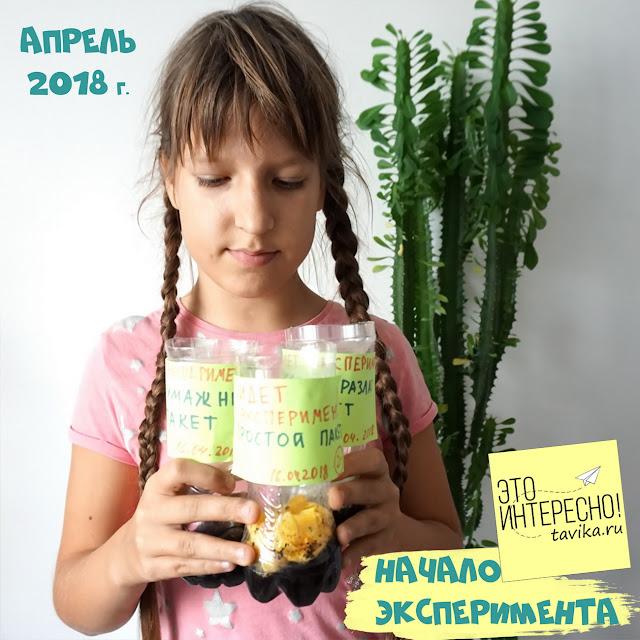 экоурок на День экологических знаний