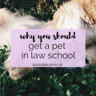 8 reasons to get a pet in law school. how to have a pet in law school. do you have time for a dog in law school? 8 reasons to get a dog. 8 reasons to get a cat. 3 things to do if you want a pet but can't have one. free month of bark box. why you should get bark box. how to volunteer with guide dogs for the blind. how to raise a service animal. why you should foster a shelter animal. | brazenandbrunette.com
