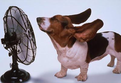 Toplotni udar kod pasa