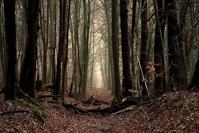 Gros Fouteau, Forêt de Fontainebleau.