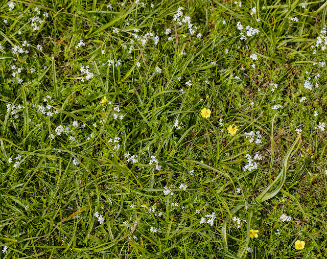 Short grass with flowers.
