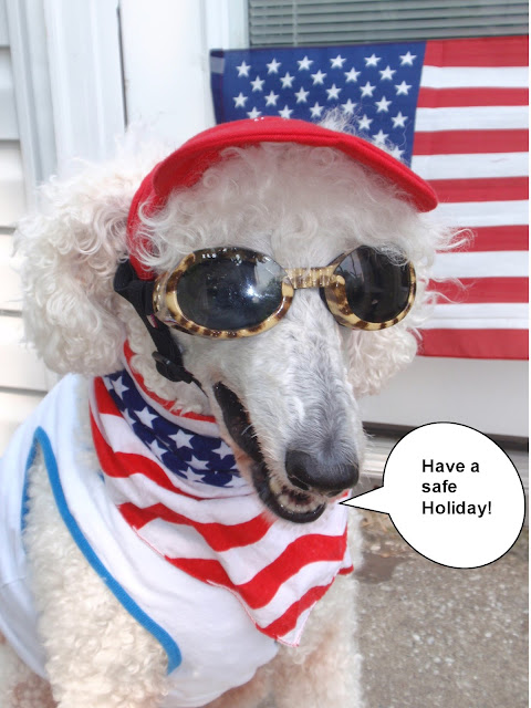 #standardpoodle in sunglasses for the #4thofJuly