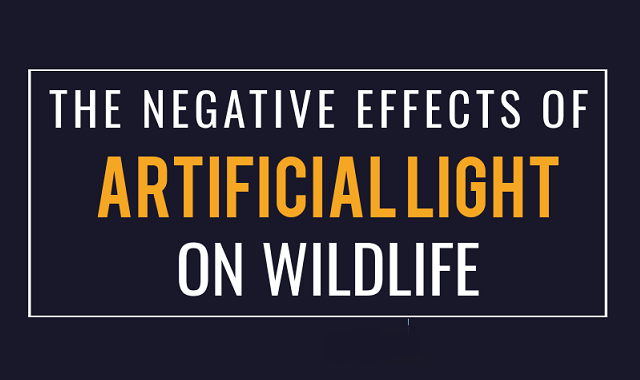 What harm is the artificial lights causing to the wildlife?