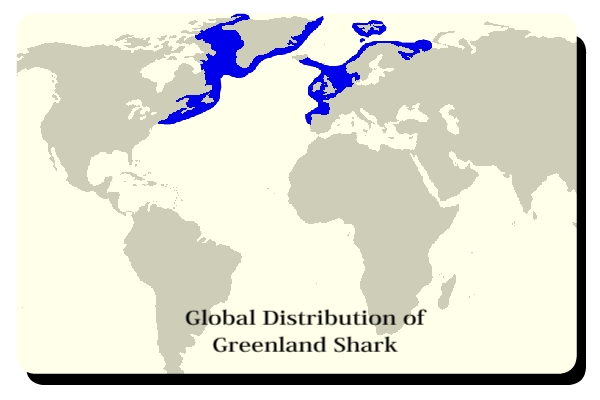 Global distribution of Greenland sharks