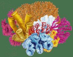 coral : loài san hô (có-rơ)