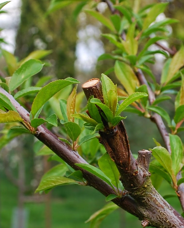 Growing Greener In The Pacific Northwest: March 2015
