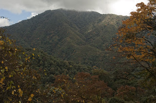 Eagle Nest Wildlife Sanctuary