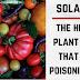 Solanina: a toxina vegetal oculta que pode estar envenenando você.
