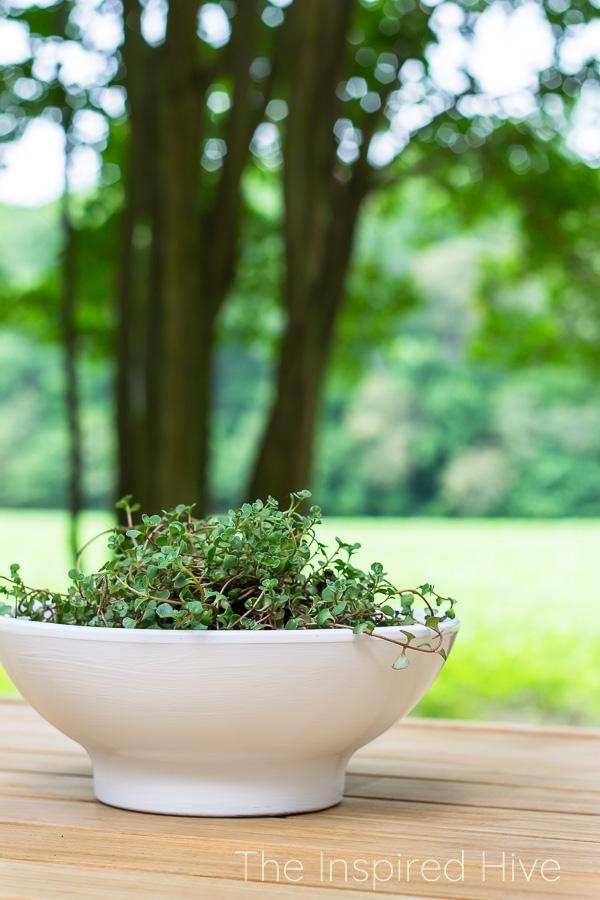 White bowl planter