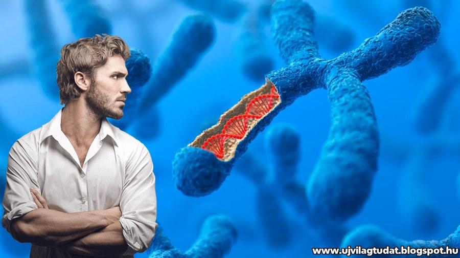 ab46365971 A legújabb kutatások szerint az Y kromoszóma eltűnik - De vajon mi történik a  férfiakkal?