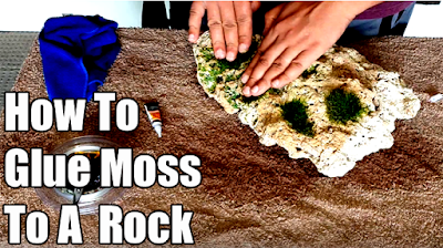 Attaching Java Moss to a Coral Rock