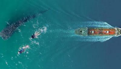 Kisah 2 ABK WNI Kabur dari Kapal China: 7 Jam Berenang di Lautan dan Dibantu Hiu