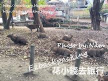 奈良公園紅葉:東大寺+興福寺