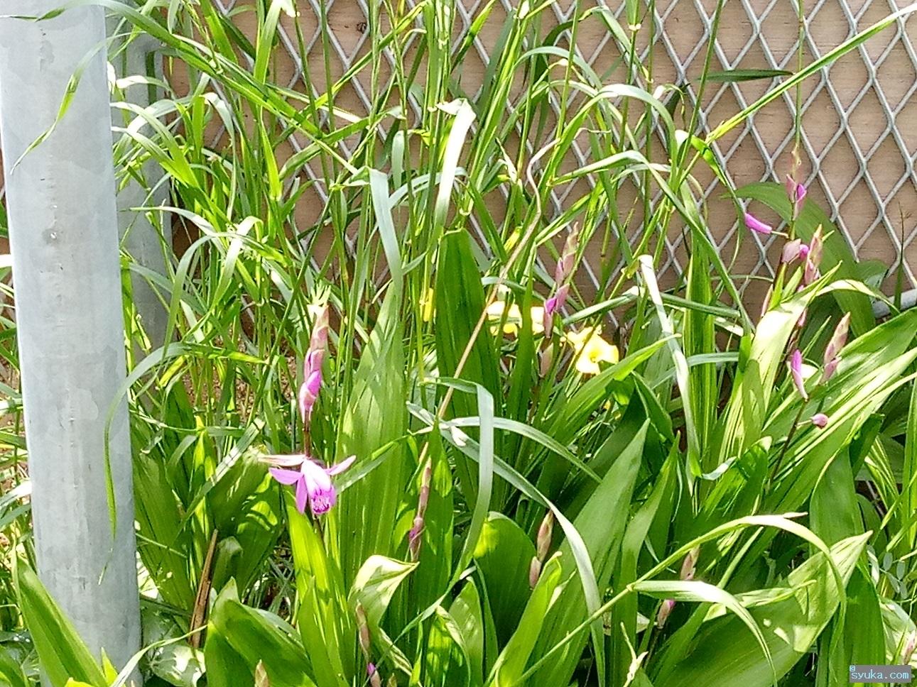 全然分からない紫ピンクの花