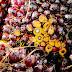 'Nederlandse banken adviseren te beleggen in niet duurzame palmoliebedrijven '