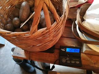 Weighing potatoes
