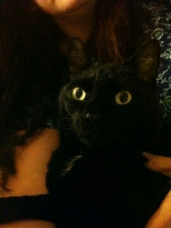 Say hello to diabetic cat Caesar
