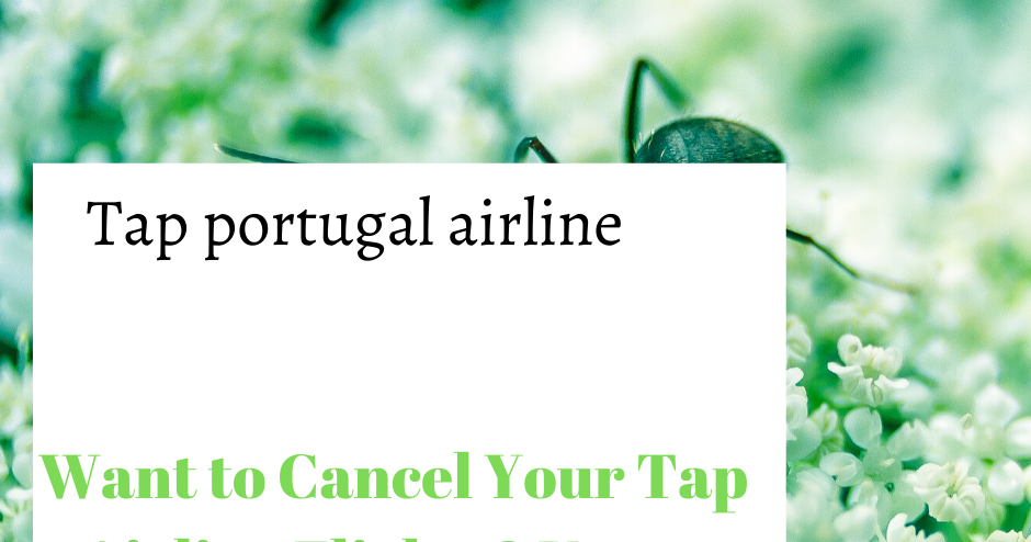 Want to Cancel Your Tap Airline Flights? Know This Before You Cancel!