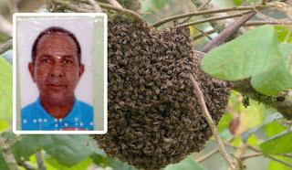 Tratorista morre após ser atacado por abelhas em Jequié