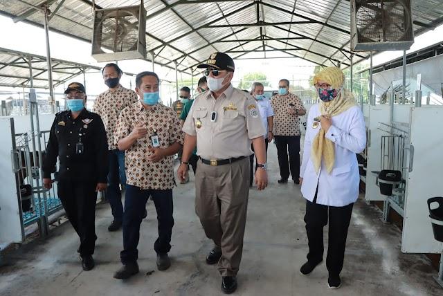 Gubernur Lampung Tinjau Peternakan Dan Penggemukan Sapi Di Jabung - Lampung Timur