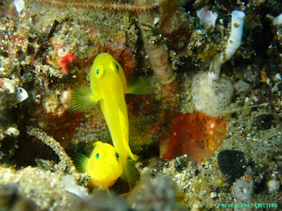 Underwater photography 水攝 macro 微距 scuba dive 潛水 TG4