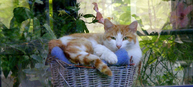 Cat in conservatory.  Indre et Loire, France. Photographed by Susan Walter. Tour the Loire Valley with a classic car and a private guide.