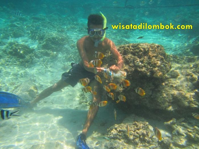 Wisata di Pantai Pink Lombok