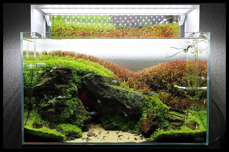 Một hồ thủy sinh có dùng in out thủy tinh