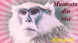 Maimuța din vise | Interpretare şi semnificaţie vise