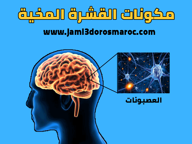 درس الجهاز العصبي وظائف المخ للسنة الثالثة اعدادي
