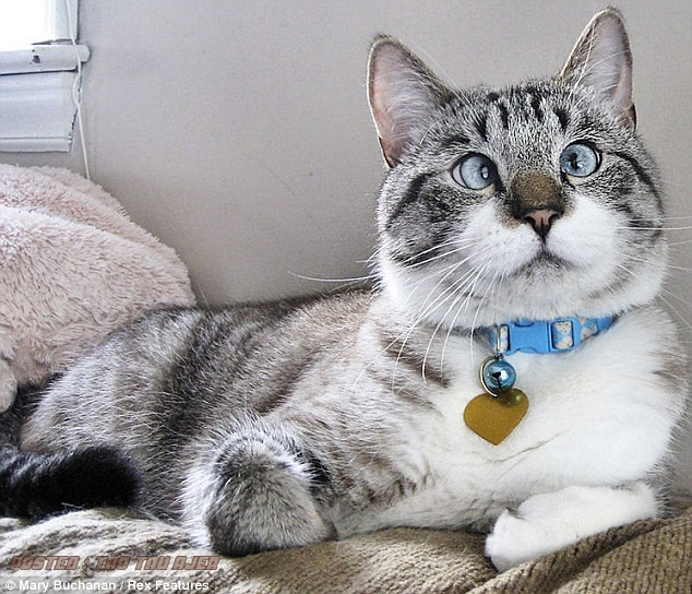 Foto Moment Kucing Lucu Imut Dan Menggemaskan