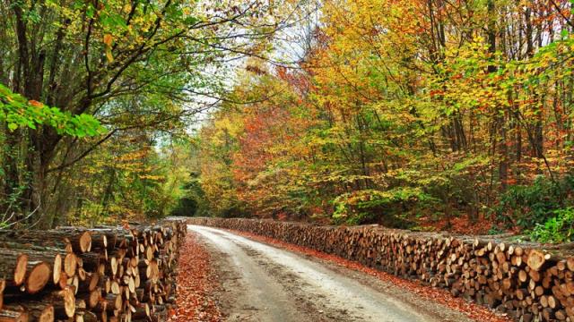 Kunduz Ormanları | Gezilmeye Değer Yerler Seyahat Tur Rehberi