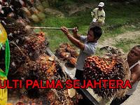 Lowongan Kerja PT. Multi Palma Sejahtera Pekanbaru
