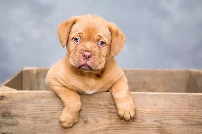 कुत्ते के बारे में रोचक तथ्य   80 Amazing Facts Of Dogs In Hindi