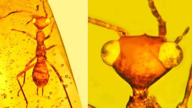 Scientists Discover 'Alien' Insect in Amber From 100 Million Years Ago