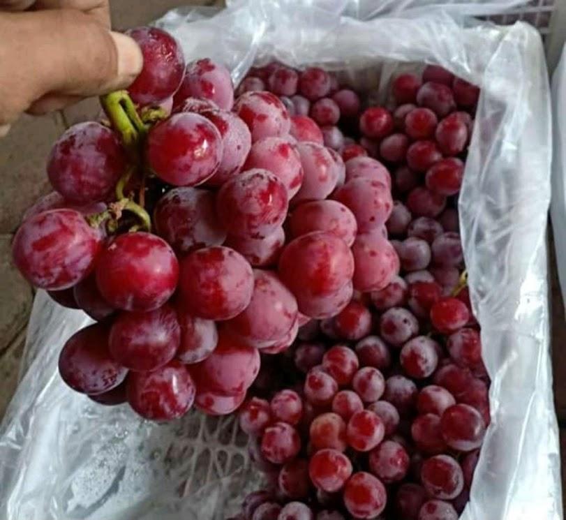 paket 4 bibit anggur Pagaralam