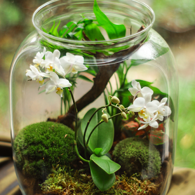 diy terrarium tips