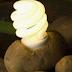 Aprenda a fazer uma lanterna com duas batatas
