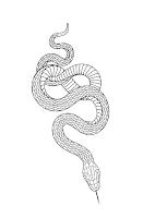 змея тату эскиз