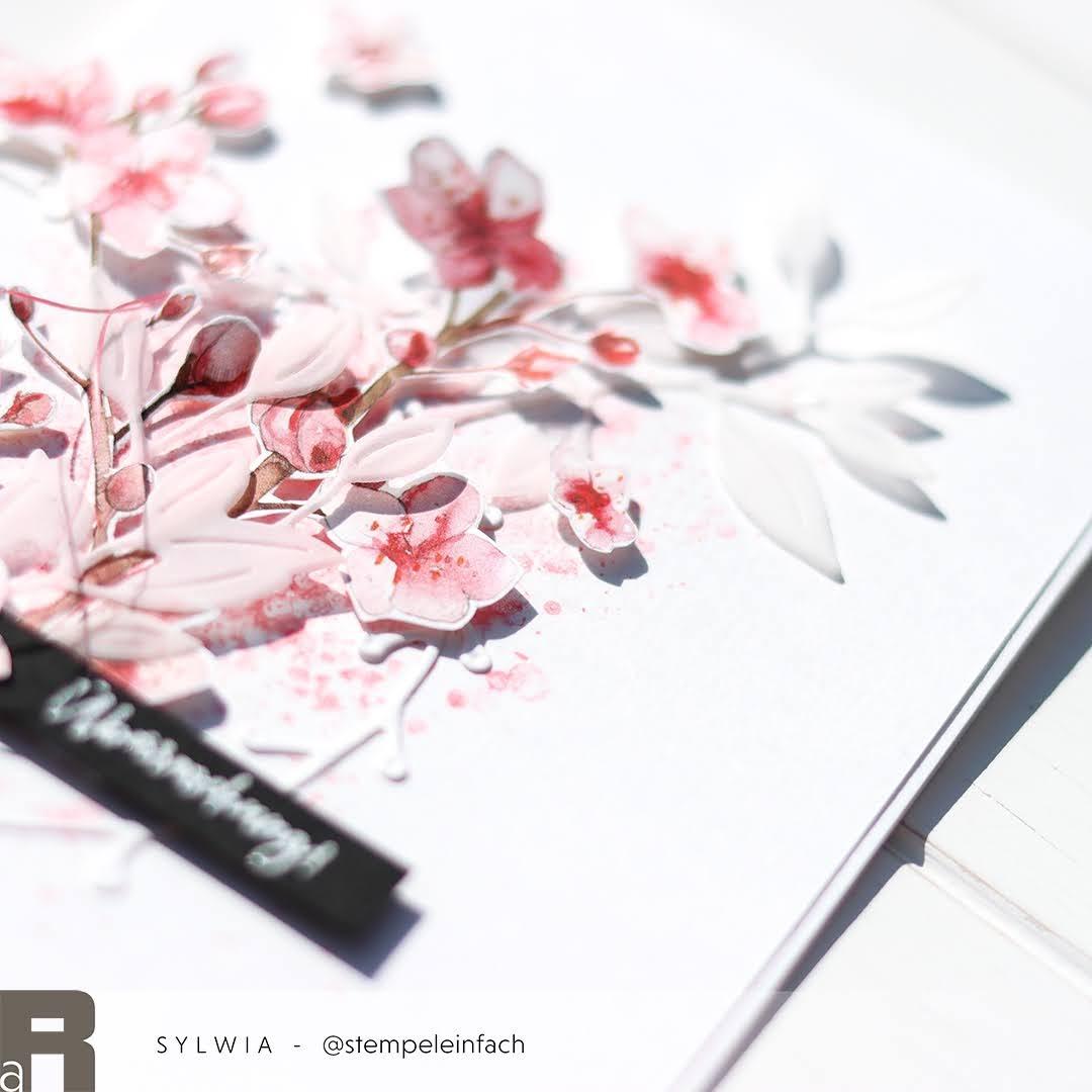 Kirschblüten-Überraschungspost-Renke