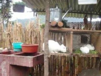 backyard rabbit cage