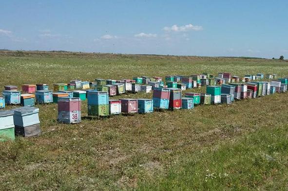 Οι πιο απαραίτητοι μελισσοκομικοί χειρισμοί της επόμενης περιόδου...