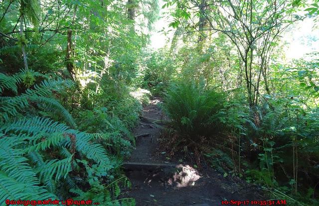 Nature Conservancy Cascade Head Preserve